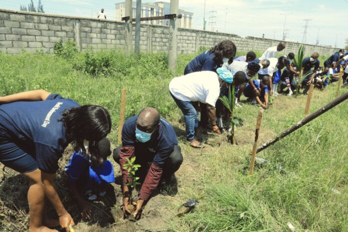 Dangote Volunteers Plant Trees to Boost Ecosystem Restoration